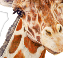 Male Giraffe Sticker