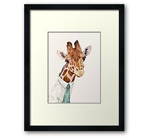 Male Giraffe Framed Print