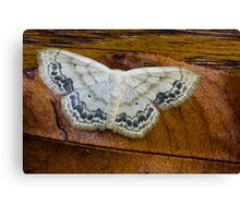 Geometer Moth Canvas Print