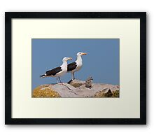 The Family Stands Proudly, Saltee Island, County Wexford, Ireland Framed Print
