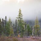 Autumn frost comes to Algonquin Park by Jim Cumming