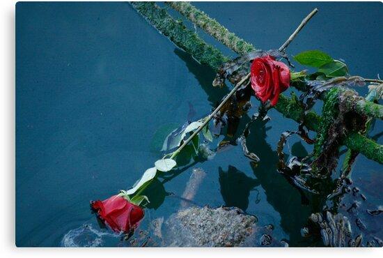 Barfleur Roses by Bob Ramsak