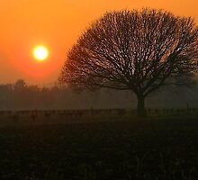 Sunset in the Fens by IngridSonja