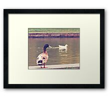Duck Tales Framed Print