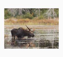 Bull Moose, Algonquin Park One Piece - Long Sleeve