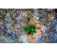Rooted In Stone Photographic Print