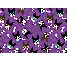 Boston Terrier Funny Faces Purple Photographic Print
