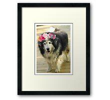 Leo from Old Friends Senior Dog Sanctuary Framed Print