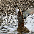 In a Flap by kalaryder