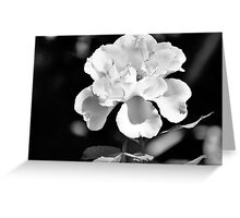 Bahama Rose ( Black & White) Greeting Card