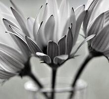 Daisies by Glenda Williams