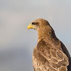 Yellow-billed Kite Portrait by M.S. Photography & Art