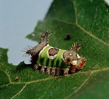 Caterpillar Eating a Leaf  by BravuraMedia