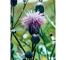 Thistle (painting) Photographic Print