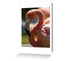 Flamingo, Playa del Carmen Greeting Card