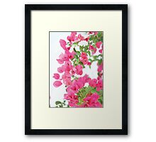 a pink bougainvillea Framed Print