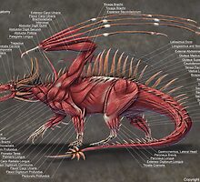 Western Dragon Muscle Anatomy by Thedragonofdoom