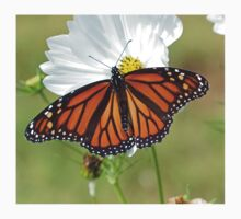 Monarch Butterfly on Cosmos Kids Tee