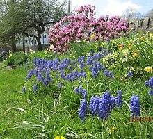 Springs First Flowers by RPBURCH