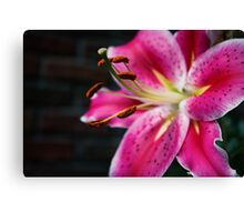 A Study In Lilies - XVIII Canvas Print