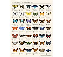 Butterflies of North America Photographic Print