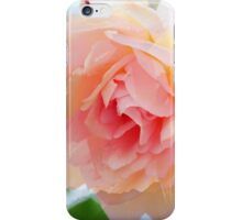 Painterly Pink Rose iPhone Case/Skin