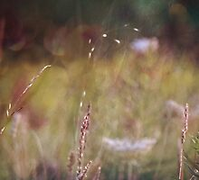 wild grasses 19 by vigor