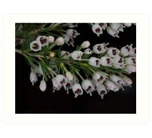 Scottish Heather Blossoms Art Print