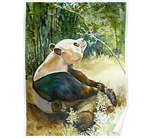 Stop and smell the Flowers id1270236 panda bear Poster