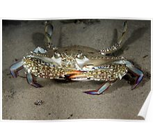 Blue Swimmer Crab Poster