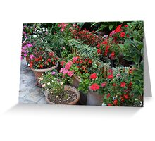 Colorful flowers in flower pots in the garden Greeting Card