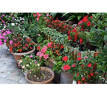 Colorful flowers in flower pots in the garden Photographic Print