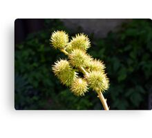Natural green branch with spikes Canvas Print