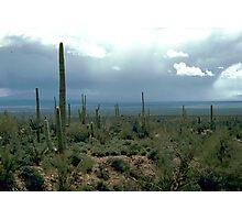 Arizona Desert and Cactuses  Photographic Print