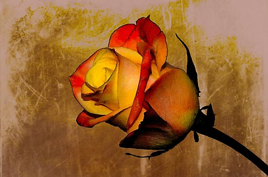 The Rose by Nicole W.