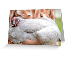 Lavender Orpington Hen Greeting Card