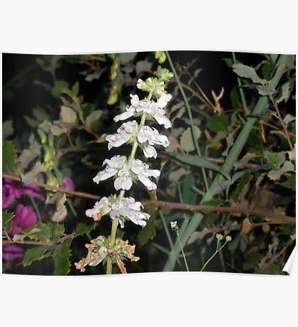Tincture Plant Poster