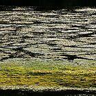 Light on the lake by Patrick Morand