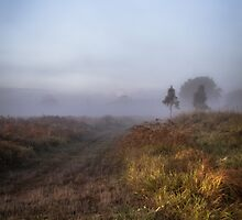 Misty Morning by Donna Rondeau