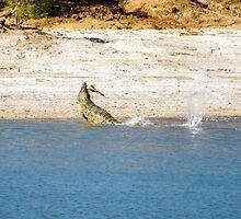 Saltwater Crocodile Eating 3/6 by Romandar