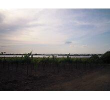 Vineyard #2 Photographic Print