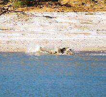 Saltwater Crocodile Eating 6/6 by Romandar