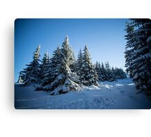 Snow Covered Trees/ Winter Fern Canvas Print