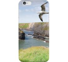 Virgin rock gulls in an updraught iPhone Case/Skin