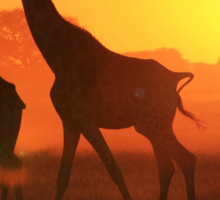 Giraffe - Sunset Gold and Harmony - African Wildlife Sticker