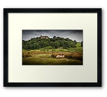 Sheep at Weobley castle Framed Print