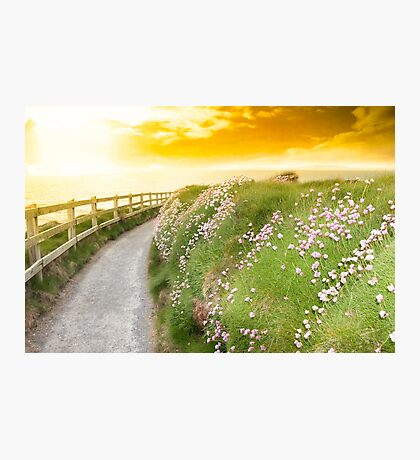 wild flowers along a cliff walk path Photographic Print