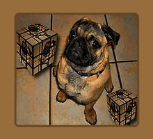 *•.¸♥♥¸.•*DON'T U BE CALLING ME SQUARE - THROW PILLOW & TOTE BAG*•.¸♥♥¸.•* by ✿✿ Bonita ✿✿ ђєℓℓσ