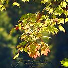 For everything there is a season, Ecc. 3:1 by vigor