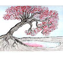 Cherry Blossom by Tarnya  Burke